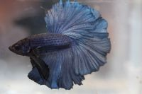 b_200_200_16777215_0___images_stories_news_III_betta_show_A3_2.jpg