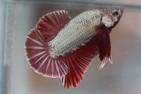 b_200_200_16777215_0___images_stories_news_III_betta_show_D4_1.jpg