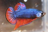 b_200_200_16777215_0___images_stories_news_III_betta_show_D5D6_3.jpg